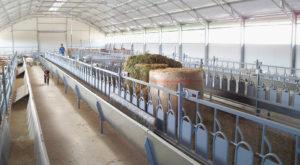 Προβατοστάσια Θερμοκηπιακού Τύπου